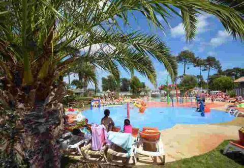 02-viviers-palmier-piscine.JPG