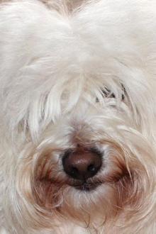 chien-accepte-portrait