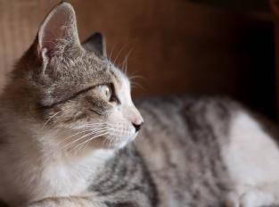 cats-q-c-1280-1024-4