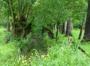 Le Marais de Magné