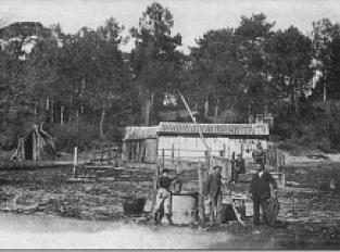 Cabane de résinier