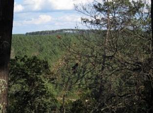 Point de vue sur la forêt