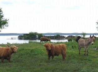 Les marais du Lac Sud