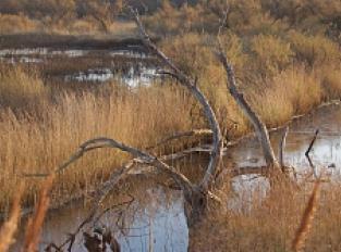 Marais de la Guerche