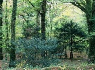 Vers le Pont-Neuf en passant par la forêt