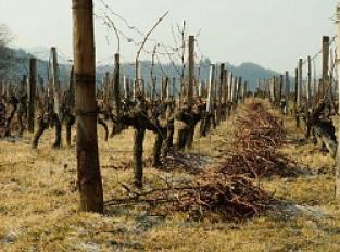 Le Vignoble de Marin