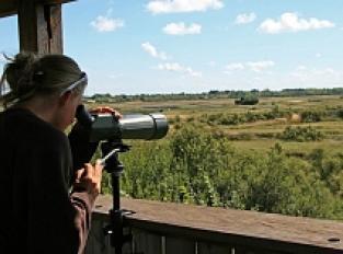 Observatoire d'oiseaux