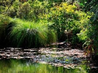 Marais du Roho