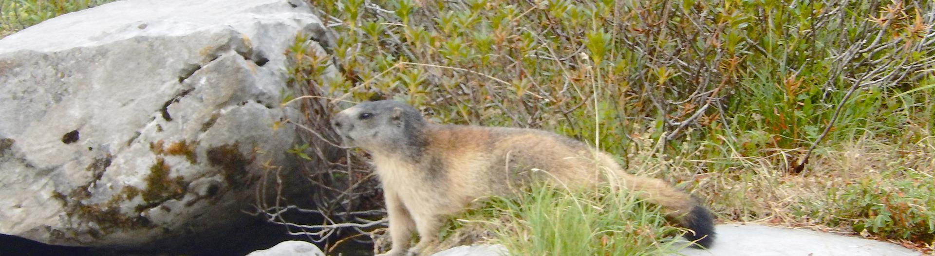 camping-sainte-disdille-alpes-marmotte
