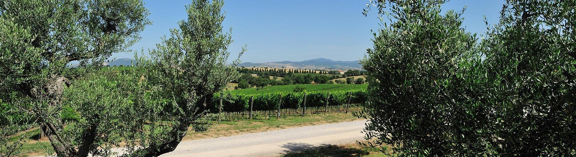 slider-paysage-toscan