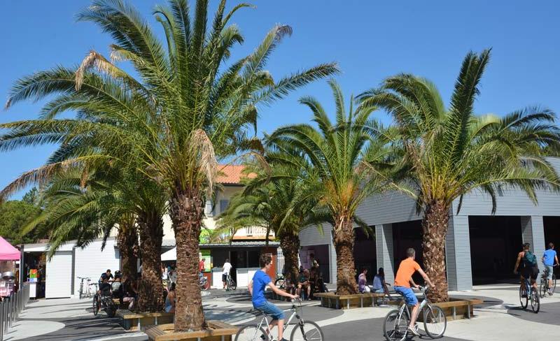 16-Le-Vieux-Port-Palmiers.jpg
