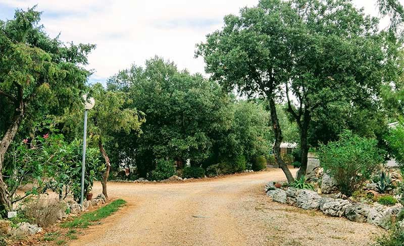 Buissière-Allée-Camping.jpg