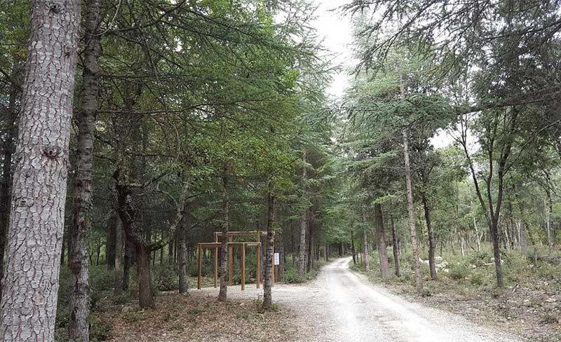 Buissière-Foret.jpg
