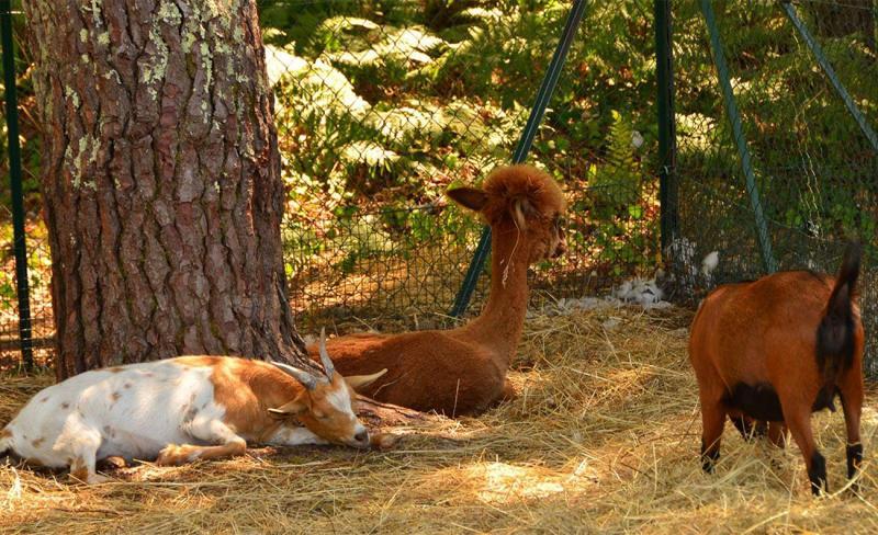 animaux-loupi-(3).jpg