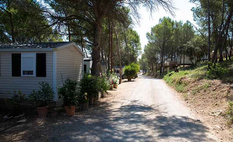 camping-mer-et-camargue-camping-ombrage