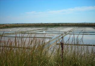 Les-marées-salants(44)-ajon
